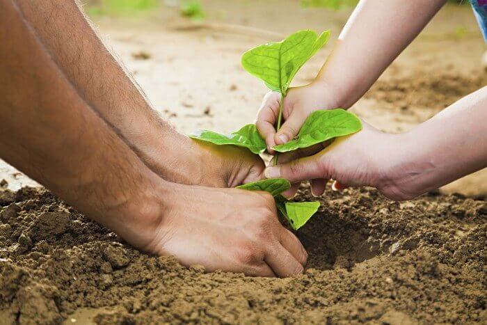 plant-tree_ruth_imagesbazaar-e1434620461804